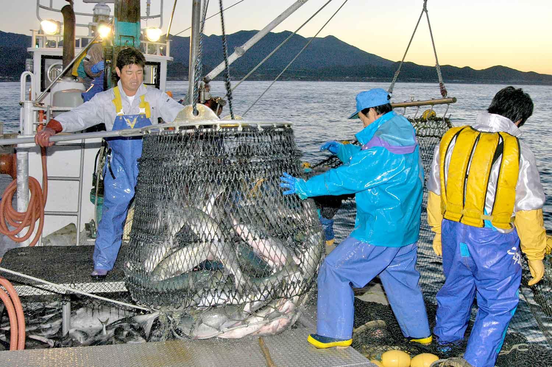 鮭漁の写真