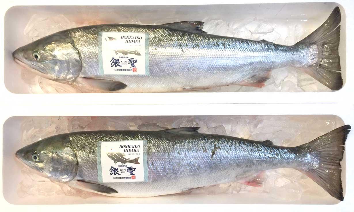 銀聖〈生鮭〉写真